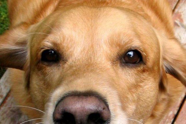 потребности экономические что делать если воет собака стоят